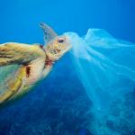 Il sindaco Italia :Siracusa all'avanguardia, la plastica un brutto ricordo