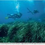 18-03-2019 - MATTINO NAPOLI  Robot nel Regno di Nettuno scoperti 24 habitat marini di Zivelli Massimo