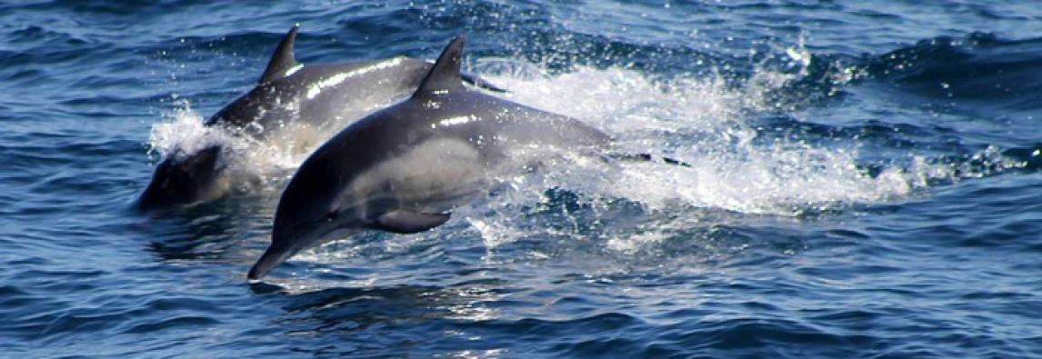 «Il delfino che ride? Non esiste, sbagliato paragonarlo all'uomo»