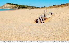 GIORNALE DI SICILIA  Sicilia – Troppe specie aliene nel Mar Mediterraneo