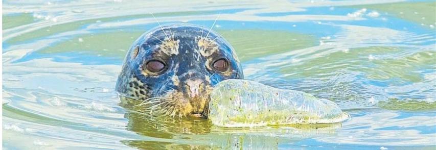 """Intervista a Peter Thomson – L`ambasciatore dell`ambiente """"Dieci passi per salvare il mare"""""""