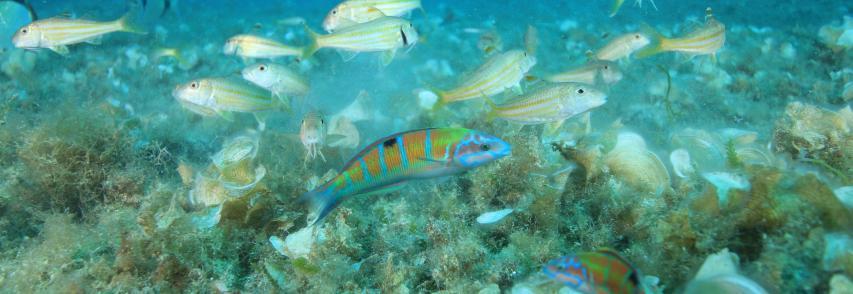 """L'Area Marina Protetta del Plemmirio """"eccellenza"""" per i viaggiatori di Tripadvisor"""