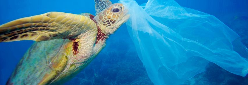 Settimo congresso Slow Food : Anidride carbonica e plastiche in mare, il pianeta rischia
