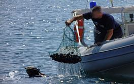 Sea Shepherd Global lancia Operazione Siracusa 2016