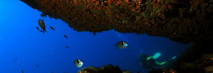 """Seacily view – Presentate le attività dell'ISPRA realizzate nell'ambito dell'Osservatorio della Biodiversità della Regione Sicilia ed il video documentario """"Sottoilmare: la biodiversità negli ambienti remoti ed estremi in Sicilia"""""""