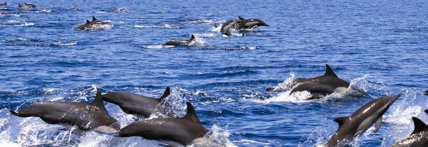 Emergenza delfini: Fabio Galluzzo «Intervenga la Regione, si predisponga un piano indennizzi»