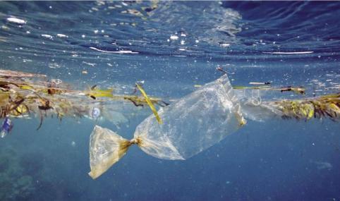 Andaloro:  «Liberiamo il mare dai rifiuti prima che sia una catastrofe»