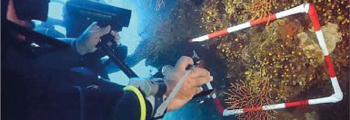Dall'Isola del Giglio l'ultima sfida: trapiantare i coralli