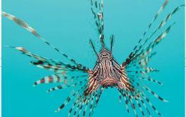 Tropicalizzazione Il mar Mediterraneo è stato invaso da mille specie