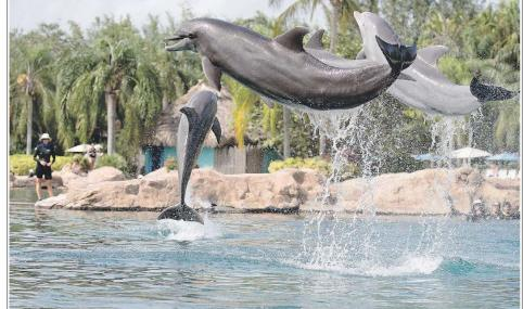 I delfini detestano nuotare con noi. I delfini meritano la felicità. Non nuotate più con loro