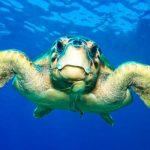 Comunicato stampa: siracusa si prepara ad accogliere le tartarughe marine