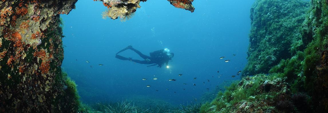 Caschi blu dell`abisso l`idea degli italiani per salvare gli oceani