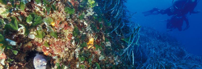 Alberto di Monaco: una maggiore diffusione delle Aree marine protette per difendere il Mediterraneo dell`inquinamento