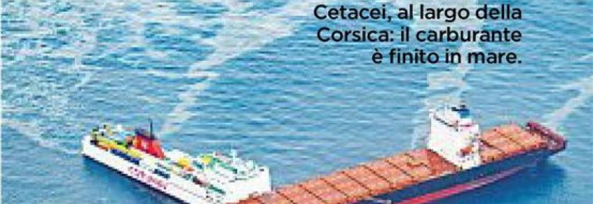 Che danni provocano gli scontri in mare?