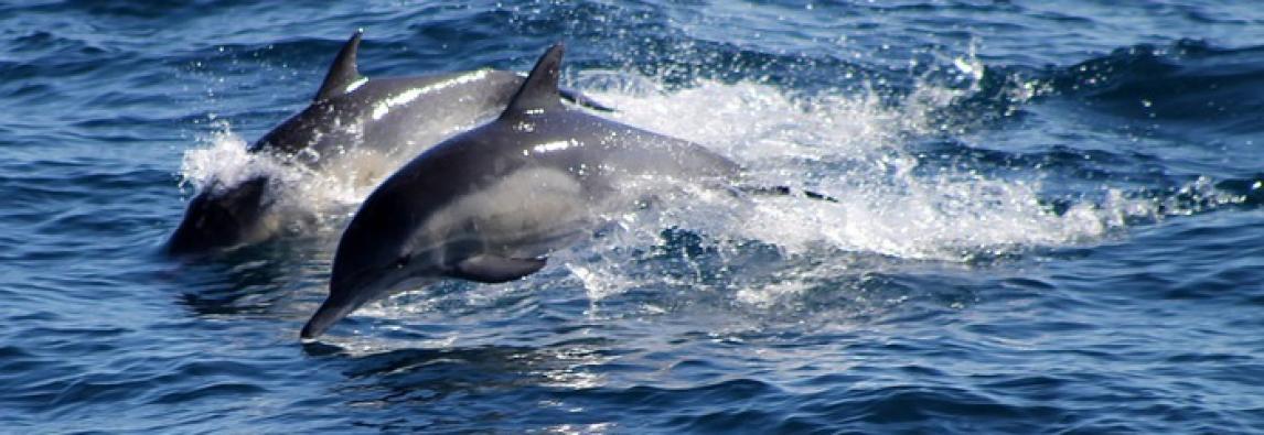 Il delfino dell`Arno