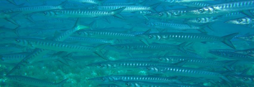 Allarme del WWF – Pesci e uccelli decimati del 60%