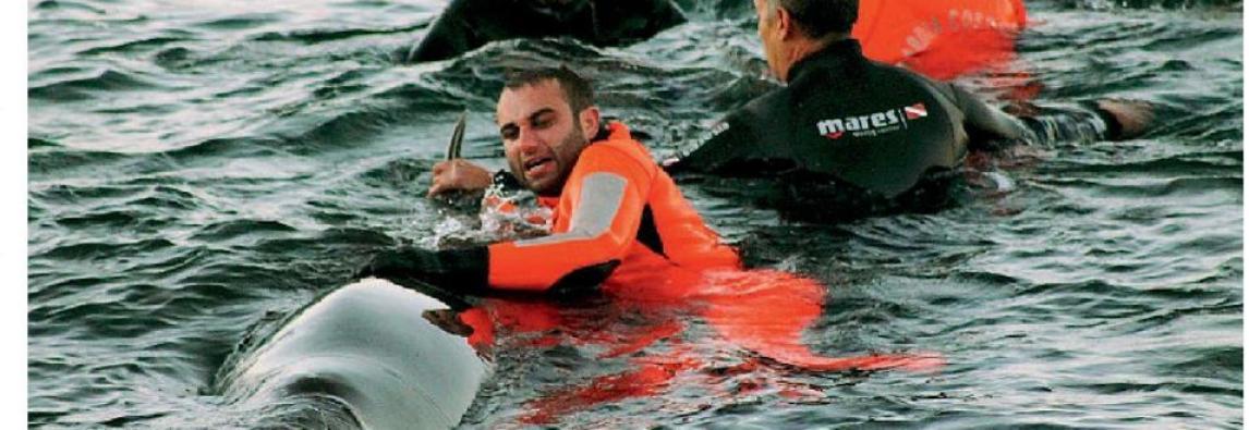 Pantelleria, premiati i salvatori dei delfini