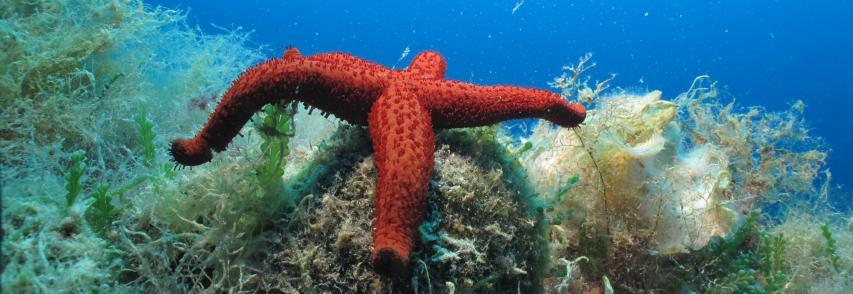 """La posidonia salva il mare e le spiagge, al via il progetto """"Lifeseposso"""" dell'Ispra"""