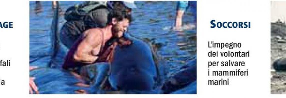 Balene, ecco perchè aumentano gli spiaggiamenti di massa