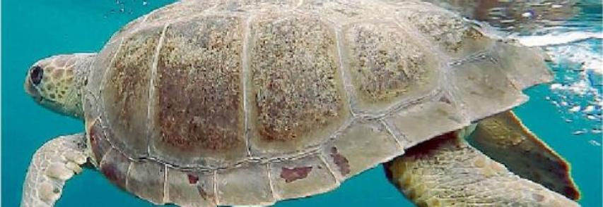Egadi «casa» delle tartarughe anche il centro di recupero