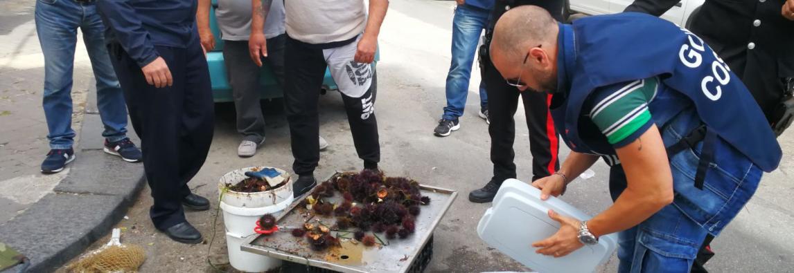 Capitaneria di Porto: sanzionato venditore abusivo di ricci di Mare in Ortigia